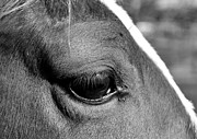 Sandi OReilly - Eye Of The Horse Black...