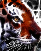 Predators Digital Art Prints - Eye of The Tiger 2 Print by Wingsdomain Art and Photography