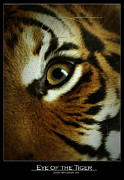 Eye Of The Tiger Print by Leito R