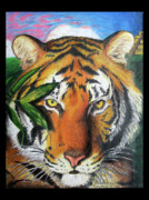 The Tiger Drawings - Eye of the Tiger by Stephen Arnold