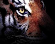 Tiger Digital Art Prints - Eye of the Tiger Print by Wingsdomain Art and Photography