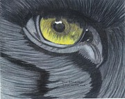 North American Wildlife Drawings Posters - Eye of the Wolf Poster by Don  Gallacher