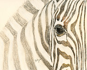Zebra Pastels - Eye of the Zebra by Flo Hayes