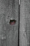 Board Fence Prints - Eye On Life Print by Douglas Barnett