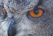 Owl Eyes Posters - Eye See You Poster by Vera Gadman