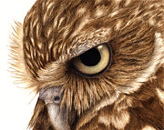 Owl Painting Metal Prints - Eyeful Metal Print by Pat Erickson
