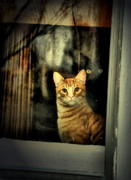 Cats Photo Prints - Eyes Behind Print by Emily Stauring