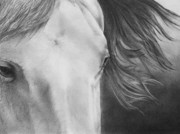 Picture Drawings Originals - Eyes of Epona by Christopher Brooks