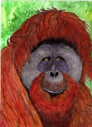 Orangutan Painting Acrylic Prints - Eyes of the Orangutan Acrylic Print by Doug Hiser