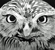 Eye Details Drawings Prints - Eyes of the Owl Print by Claudiu Radulescu