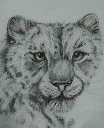 Cats Drawings Originals - Eyes Of The Snow Leopard by Sandra Valentini