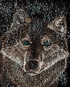 Timber Drawings Posters - Eyes of the snow wolf Poster by Nick Gustafson