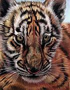 Big Cat Pastels Posters - Eyes of Youth Poster by Deb LaFogg-Docherty