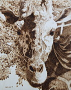 Giraffe Pyrography Originals - Eyes on You by Heather Ward