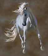 Equine Digital Art Posters - Fabuloso Poster by Barbara Hymer