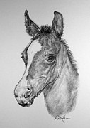 Wild Horses Drawings - Face of a Foal by Roy Kaelin