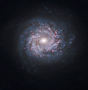 Starforming Prints - Face-on Spiral Galaxy Ngc 3982 Print by Stocktrek Images