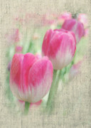 Pink Flower Prints Posters - Faded Floral 8 Poster by Michael Peychich