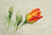 Floral Prints Posters - Faded Floral 9 Poster by Michael Peychich