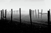 Fence Post Photos - Fading Into The Fog II by Douglas Stucky