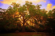 Andrew Armstrong  -  Orange Room Images - Fairchild Oak Sunrise