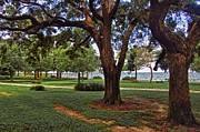 Fairhope Lower Park 2 Trees Print by Michael Thomas