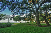 Fairhope Lower Park 4 Print by Michael Thomas
