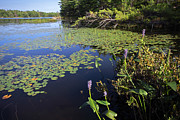 Bay Islands Photo Prints - Fairy Lake Print by Charline Xia