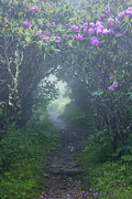 Craggy Gardens Framed Prints - Fairy Path Framed Print by Rob Travis