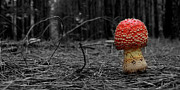 Fungus Digital Art - Fairy Tale Mushroom by David Paul Murray