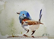 Wren Art - Fairy Wren by Siby Chacko