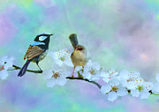 Wrens Digital Art - Fairy Wrens by Angel Gold