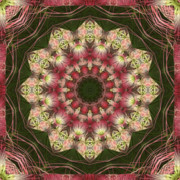 Mandalas Prints - Faith Print by Bell And Todd