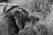 Best Friend Photos - Faithful by Donna Blackhall