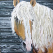Paso Fino Stallion Prints - Falcon de Vez Print by Jonelle T McCoy