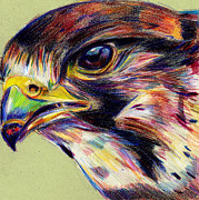 Falcons Mixed Media - Falcon by Melissa  Hardiman