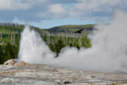 Water Vapor Prints - Falcon over Old Faithful - Geyser Yellowstone National Park WY USA Print by Christine Till