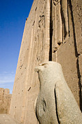 Horus Metal Prints - Falcon Statue at Edfu Metal Print by Darcy Michaelchuk