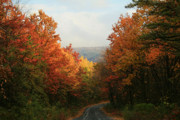 Greenland Prints - Fall along Greenland Road Print by Lori Deiter