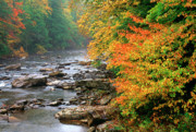 Cranberry Photo Prints - Fall along the Cranberry River Print by Thomas R Fletcher