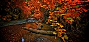Thomas Born Acrylic Prints - Fall along the creek Acrylic Print by Thomas Born