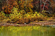 West Fork River Photos - Fall along West Fork River by Thomas R Fletcher