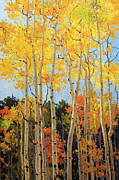 Fall Leaves Paintings - Fall Aspen Santa Fe by Gary Kim