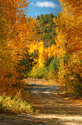 Divide Prints - Fall Aspen Trail Print by Ken Smith