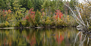 Adirondack Park Art - Fall at Lake Colby - Adirondack Park - New York by Brendan Reals