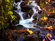 Wahkeena Creek Framed Prints - Fall at Wahkeena Framed Print by Jon Ares