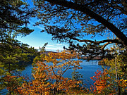 Fall Autumn Colors - Meech Lake Under Blue Skies Framed By Pine Branches And Yellow Leaf Trees Print by Chantal PhotoPix