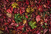 Fall Leaves Prints - Fall autumn leaves Print by John Farnan