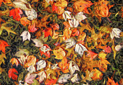 Fall Autumn Leaves On Water Print by Randy Steele