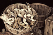 Sepia Pyrography Prints - fall Basket of Vegetables - Sepia Print by Linda Phelps